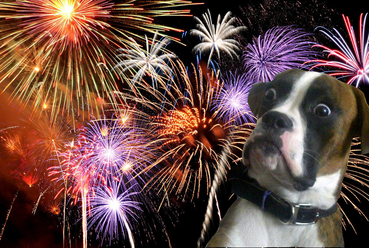 Dogs love fireworks